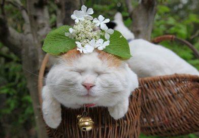 mơ thấy mèo