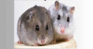 Nằm mơ thấy chuột đánh con nào chắc trúng